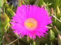 Blumenidylle