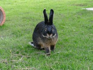 Kaninchenherr Willow