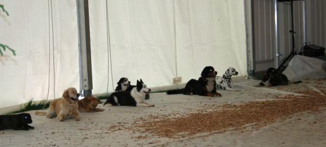 Plauschgruppe: obwohl wir uns nur zum Plausch treffen, sind die Hund sehr folgsam und sehr sozial!