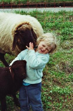 Unsere Tochter Amy kommt gerne mit zu den Schafen. Die Schafe sind sehr zutraulich und kinderlieb:-)