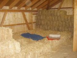 Ihr Schlafplatz im Stroh