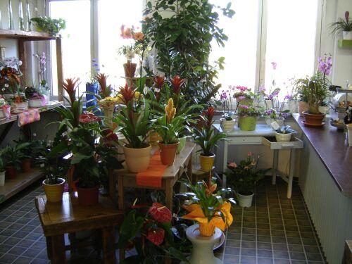 Reparto delle piante da appartamento